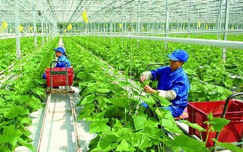 Hợp tác xã mê làm nông nghiệp 4.0, thích sản xuất theo chuỗi